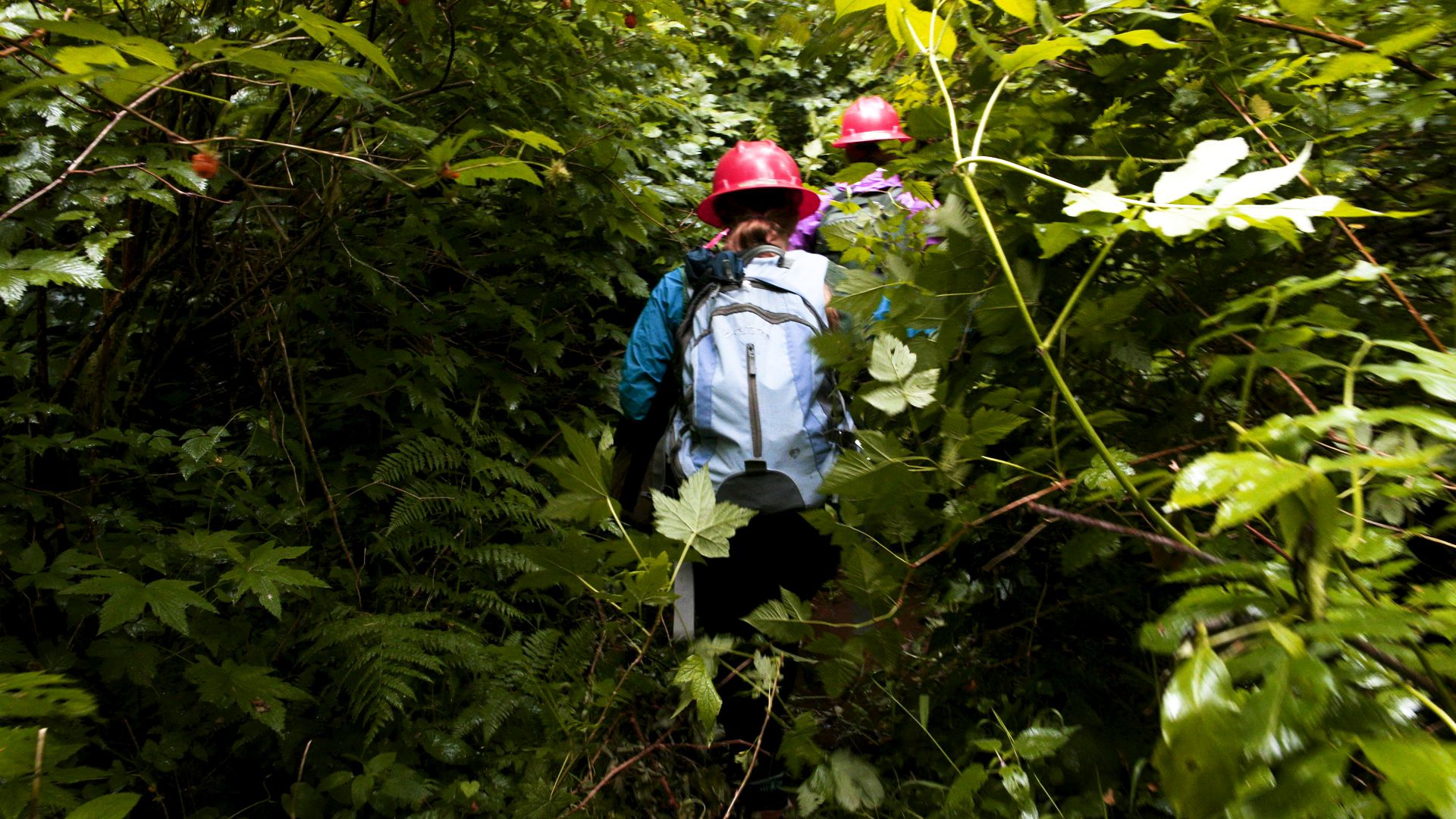 Searching for the most elusive bird in the Northwest